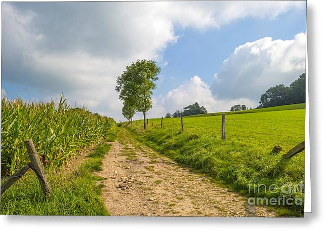 Limburg Greeting Cards - Dirt road through the countryside in summer Greeting Card by Jan Marijs