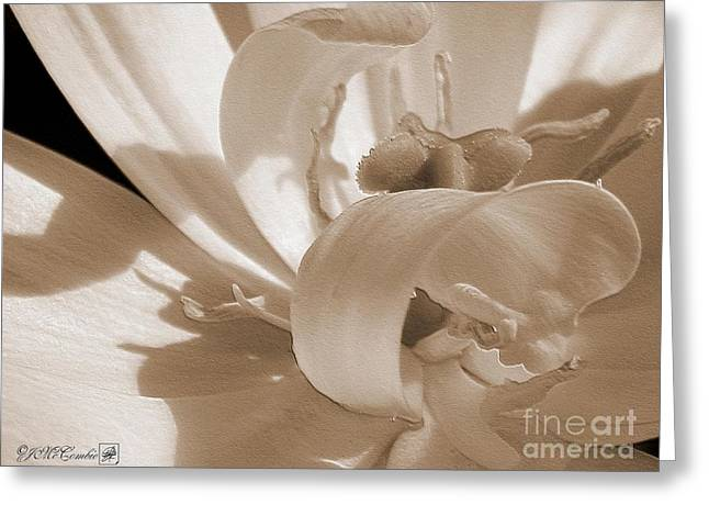 Mccombie Greeting Cards - Double Late Tulip named Angelique Greeting Card by J McCombie