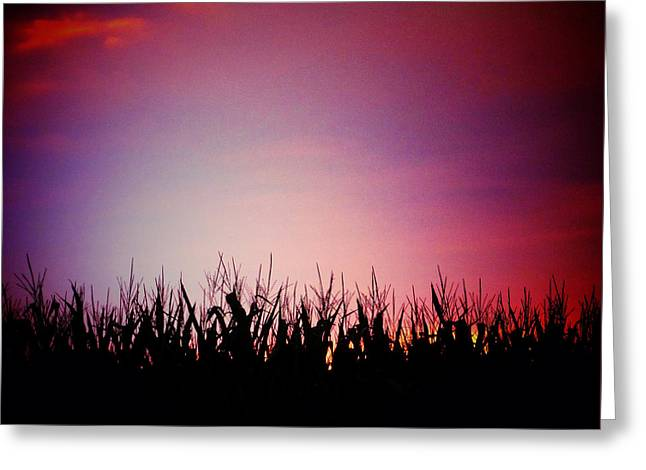 Cornfield Digital Art Greeting Cards - Dusk Greeting Card by Natasha Marco