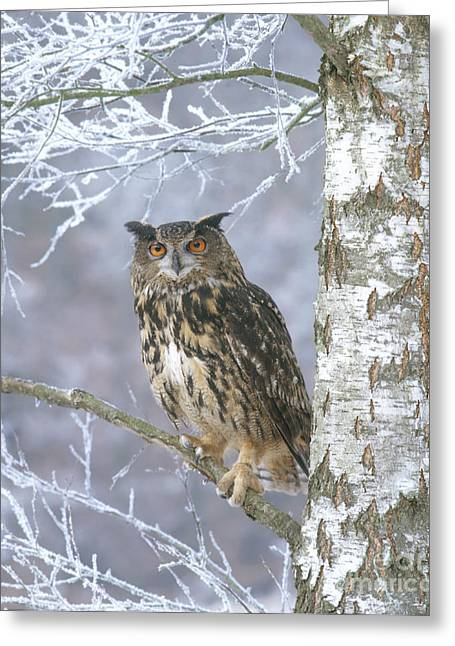 Owl Photographs Greeting Cards - Eagle Owl Greeting Card by Hans Reinhard