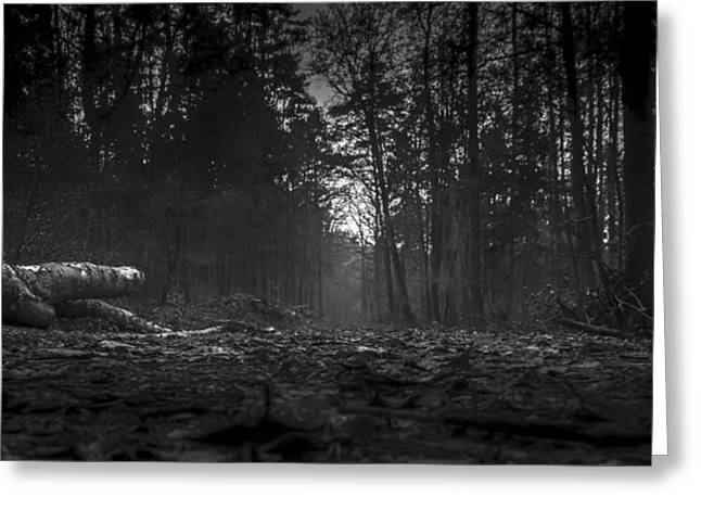 Ground Level Greeting Cards - Early Morning in the Forest Greeting Card by Mountain Dreams