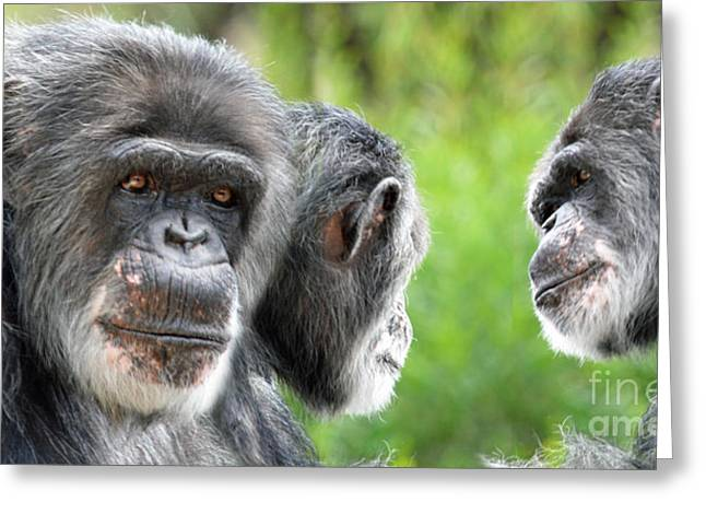 Bonding Digital Art Greeting Cards - 3 Elderly Chimps Bonding Greeting Card by Jim Fitzpatrick