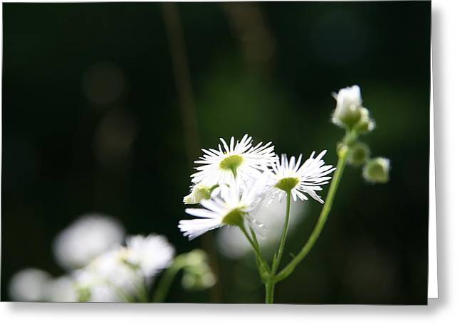 Wildflower Photography Greeting Cards - Enlightened  Greeting Card by Neal  Eslinger