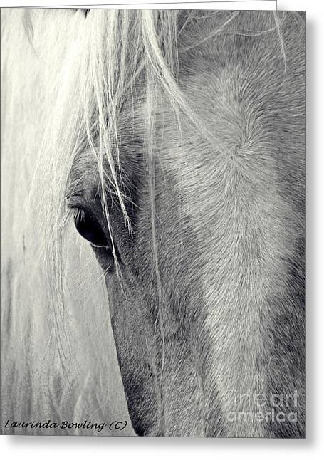 Paint Photograph Greeting Cards - Equine Study Greeting Card by Laurinda Bowling