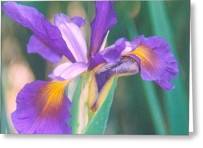 Robert Bray Greeting Cards - Exotic Iris Greeting Card by Robert Bray