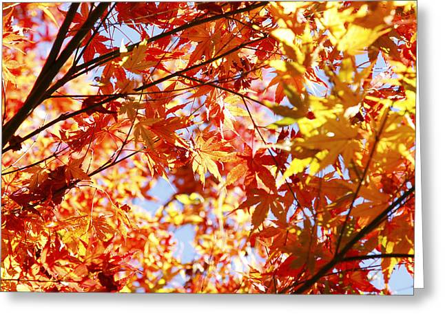 Leaves Photographs Greeting Cards - Fall forest Greeting Card by Les Cunliffe