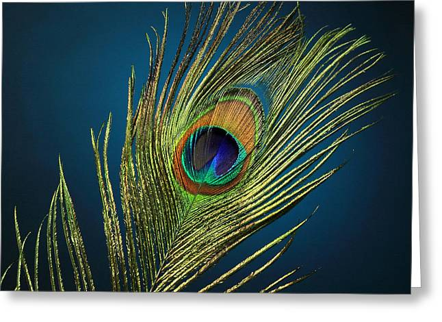 Fed Greeting Cards - Feathers Greeting Card by Mark Ashkenazi