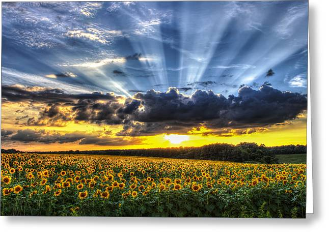 Gastonia Photographs Greeting Cards - Field of View Greeting Card by Chris Austin