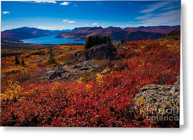 Illuminate Greeting Cards - Fish Lake - Yukon Territory - Canada Greeting Card by Stephan Pietzko