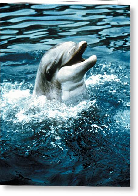 Flippers Greeting Cards - Flipper  Greeting Card by Silver Screen