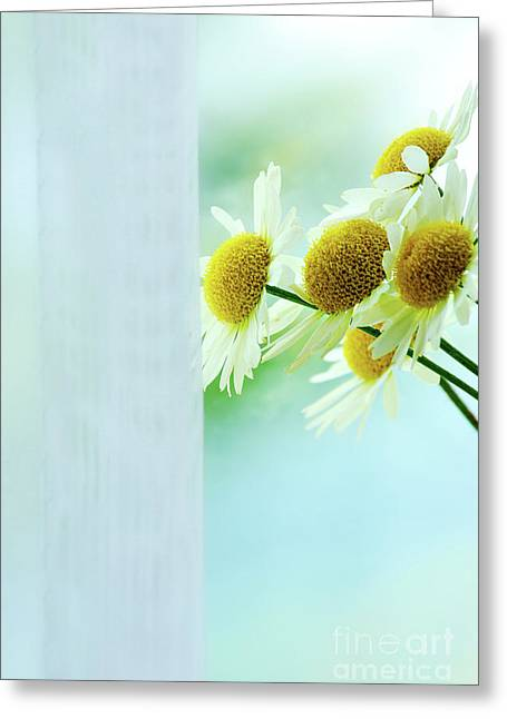 Glass Vase Photographs Greeting Cards - Flowers Greeting Card by HD Connelly