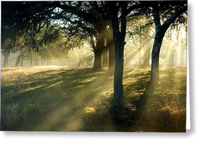 First Sunset Greeting Cards - Foggy Sunrise Greeting Card by Robert Anschutz