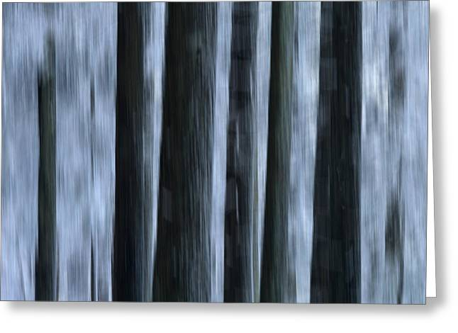 Cold Photographs Greeting Cards - Forest Greeting Card by Bernard Jaubert