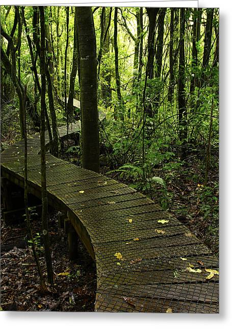 Green Day Greeting Cards - Forest boardwalk Greeting Card by Les Cunliffe