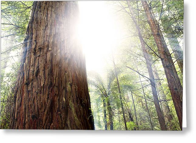 Beauty Greeting Cards - Forest light Greeting Card by Les Cunliffe