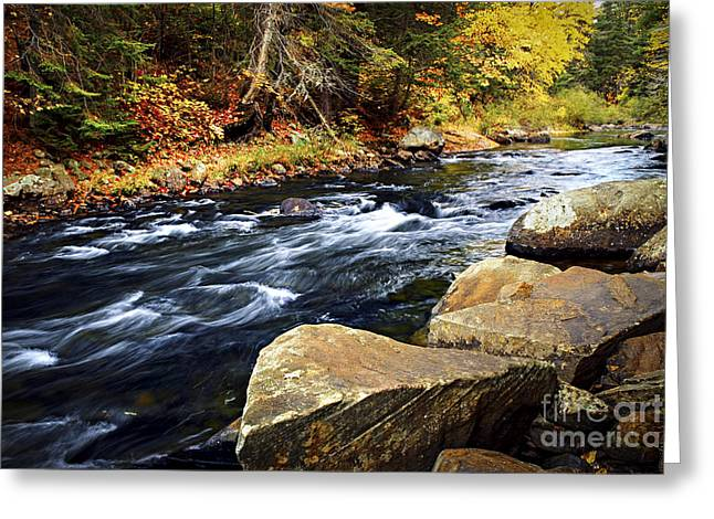 Autumn Greeting Cards - Forest river in the fall Greeting Card by Elena Elisseeva