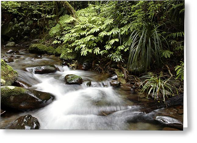 Flowing Stream Greeting Cards - Forest stream  Greeting Card by Les Cunliffe