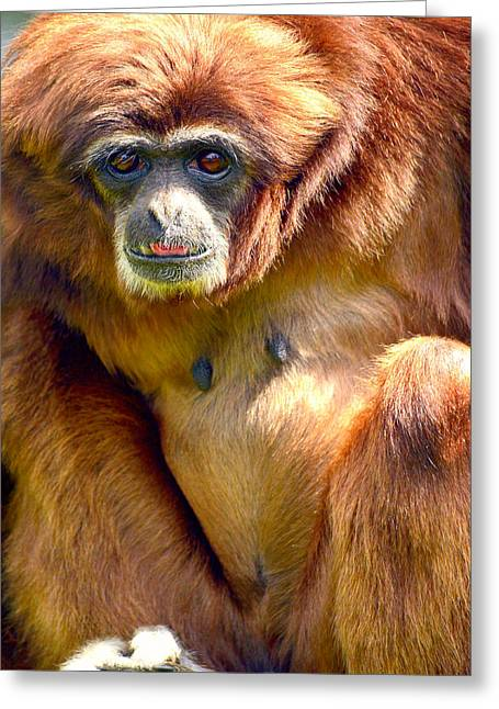 Gibbon Monkey Greeting Card by Toppart Sweden