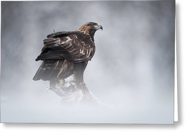 Snow Drifts Greeting Cards - Golden Eagle Greeting Card by Andy Astbury