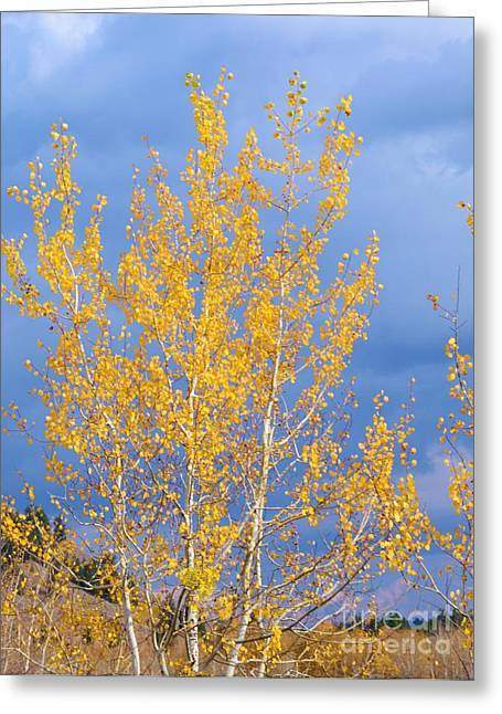 Struckle Greeting Cards - Golden Leaves Greeting Card by Kathleen Struckle