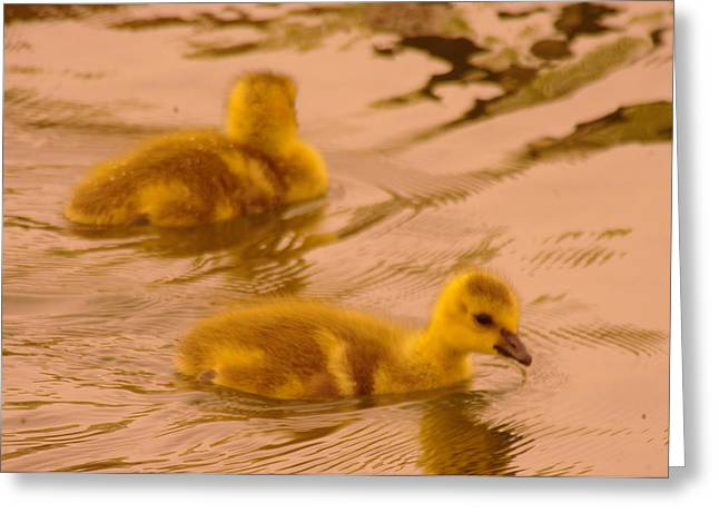 Little Critters Greeting Cards - Goslings Greeting Card by Jeff  Swan