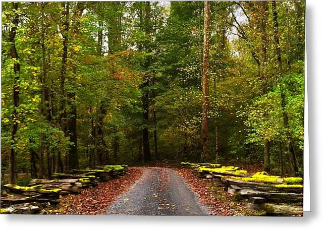 Great Smoky Mountains Greeting Card by Janice Spivey
