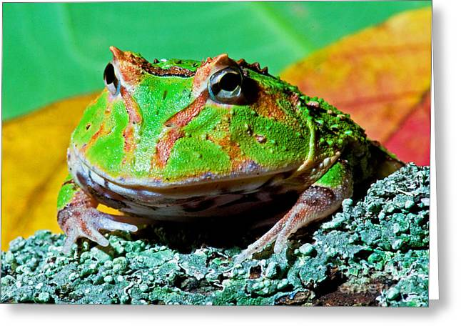 Green Fantasy Frogpacman Frog Greeting Card by Millard H. Sharp