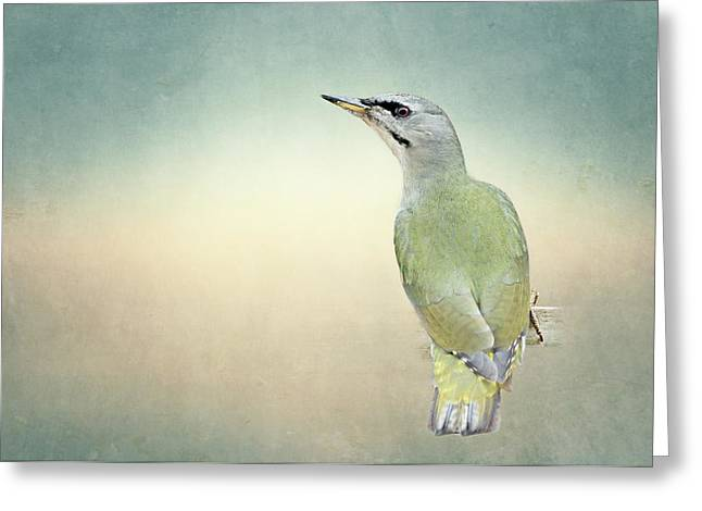 Wild Bird Mixed Media Greeting Cards - Grey-headed Woodpecker Greeting Card by Heike Hultsch