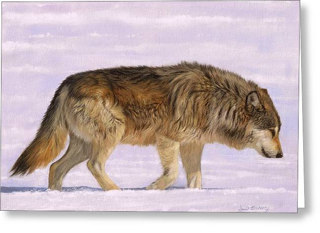 Timer Greeting Cards - Grey Wolf Greeting Card by David Stribbling