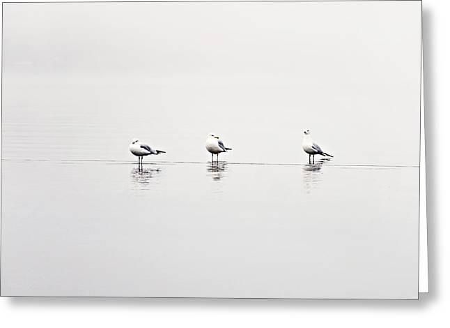 Foggy Ocean Greeting Cards - 3 Gulls Greeting Card by Sylvia Cook