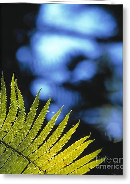 Cibotium Greeting Cards - Hapuu Fern Greeting Card by G. Brad Lewis