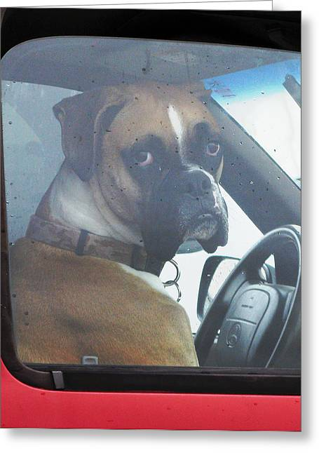 Boxer Digital Greeting Cards - Hate Waiting Greeting Card by Patricia Januszkiewicz