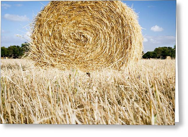Hay Bales Greeting Cards - Hay Bales Greeting Card by Tim Hester