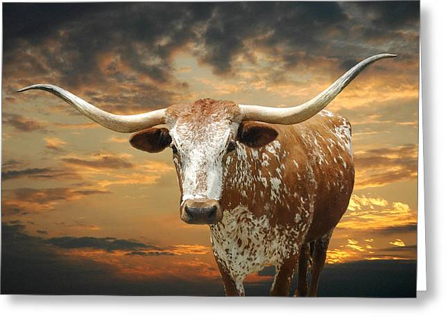 Robert Anschutz Greeting Cards - Henly Longhorn Greeting Card by Robert Anschutz