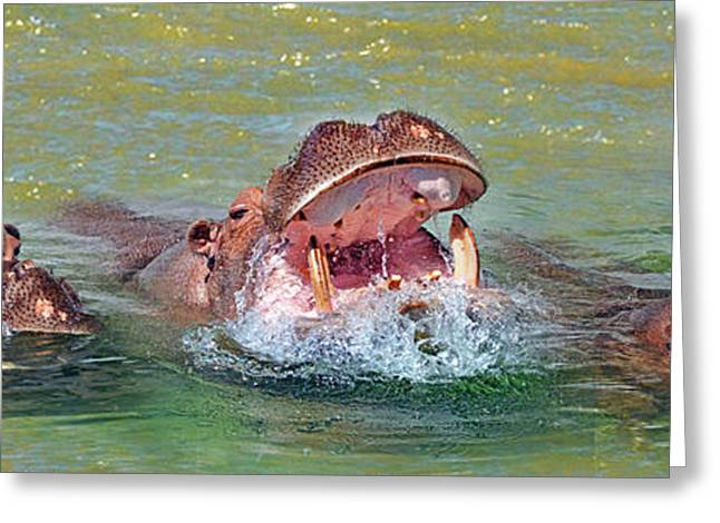 Hippopotamus Digital Greeting Cards - 3 Hippos Having Fun  Greeting Card by Jim Fitzpatrick