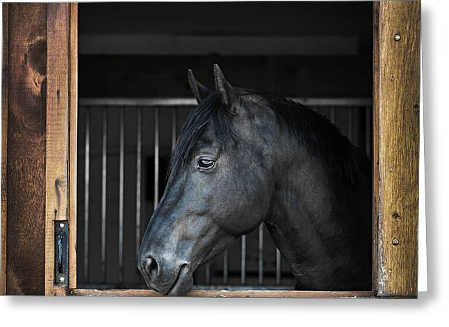 Quarter Horses Greeting Cards - Horse in stable Greeting Card by Elena Elisseeva
