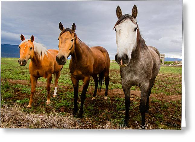 Trio Greeting Cards - 3 Horses Greeting Card by Jean Noren