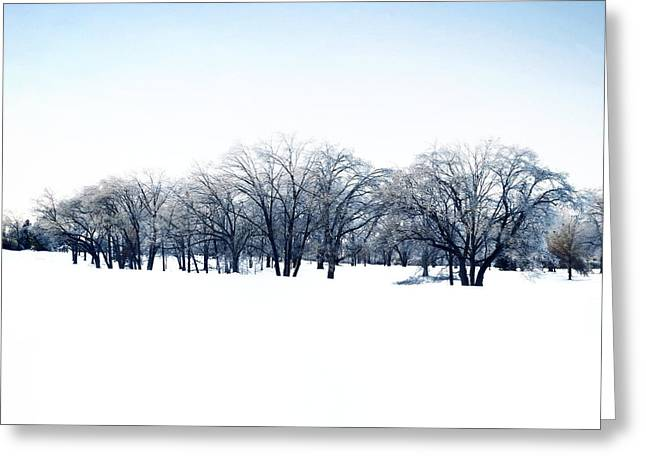 Bare Trees Greeting Cards - Humber Valley Greeting Card by Natasha Marco