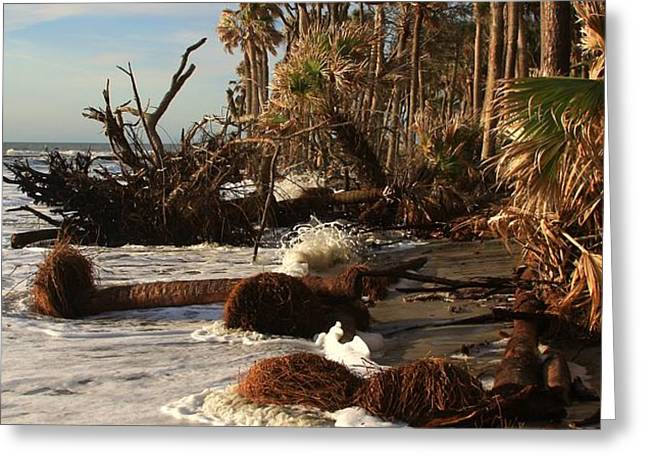 Hunting Island Greeting Card by Michael Weeks
