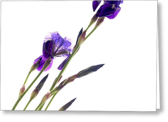 Simplicity Greeting Cards - Iris Greeting Card by Bernard Jaubert