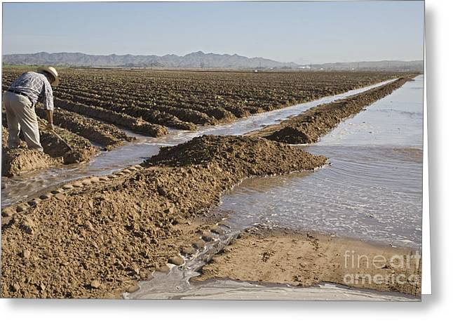 Irrigation In Arizona Desert Greeting Card by Jim West