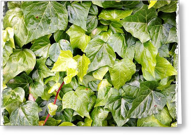 Ivy Greeting Card by Les Cunliffe