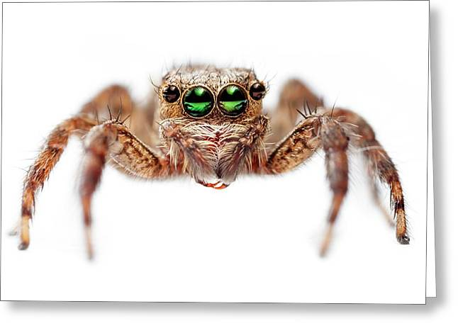 Jumping Spider Greeting Card by Alex Hyde