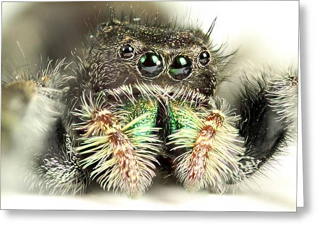 Jumping Spider Greeting Card by Paul Fell