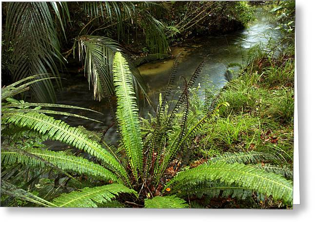 Brook Photographs Greeting Cards - Jungle stream Greeting Card by Les Cunliffe
