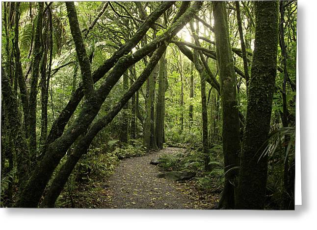 Humid Greeting Cards - Jungle trail Greeting Card by Les Cunliffe