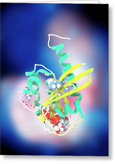 K-ras Benzamidine And Gtp Complex Greeting Card by Ramon Andrade 3dciencia
