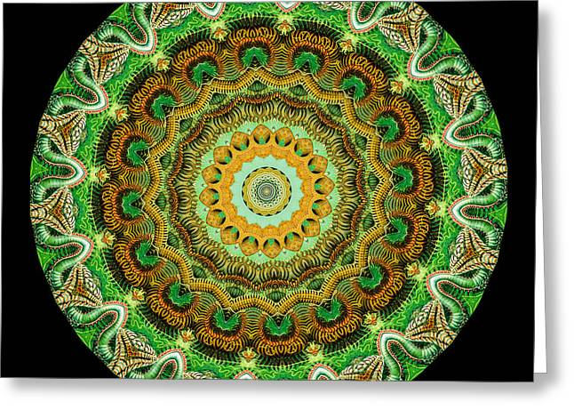 Kaleidoscope Greeting Cards - Kaleidoscope Ernst Haeckl Sea Life Series Greeting Card by Amy Cicconi