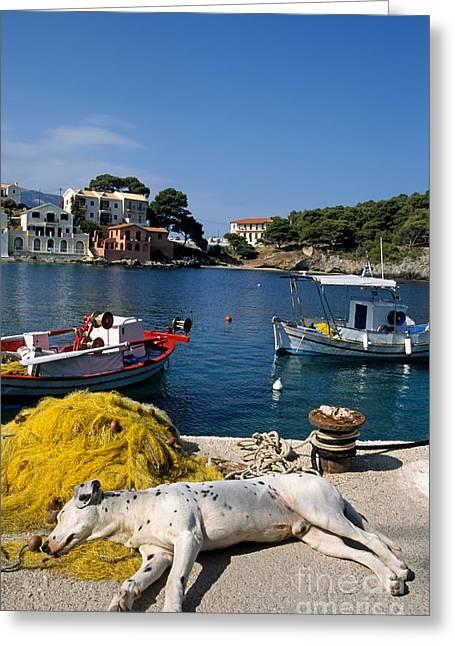 Sea Dog Framed Prints Greeting Cards - Asos village Greeting Card by George Atsametakis
