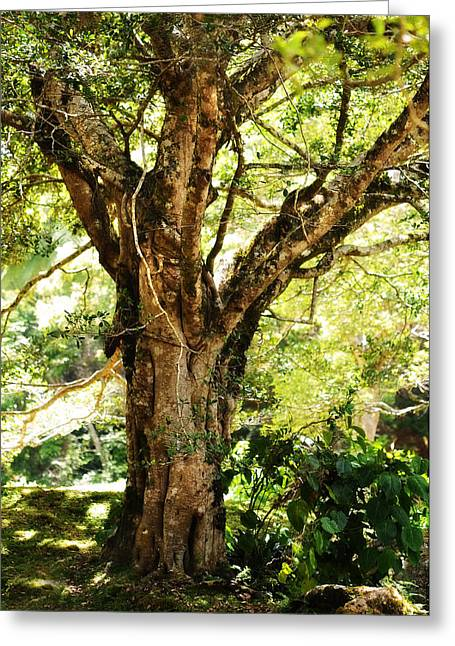 Best Sellers Greeting Cards - Kingdom of the Trees. Peradeniya Botanical Garden. Sri Lanka Greeting Card by Jenny Rainbow
